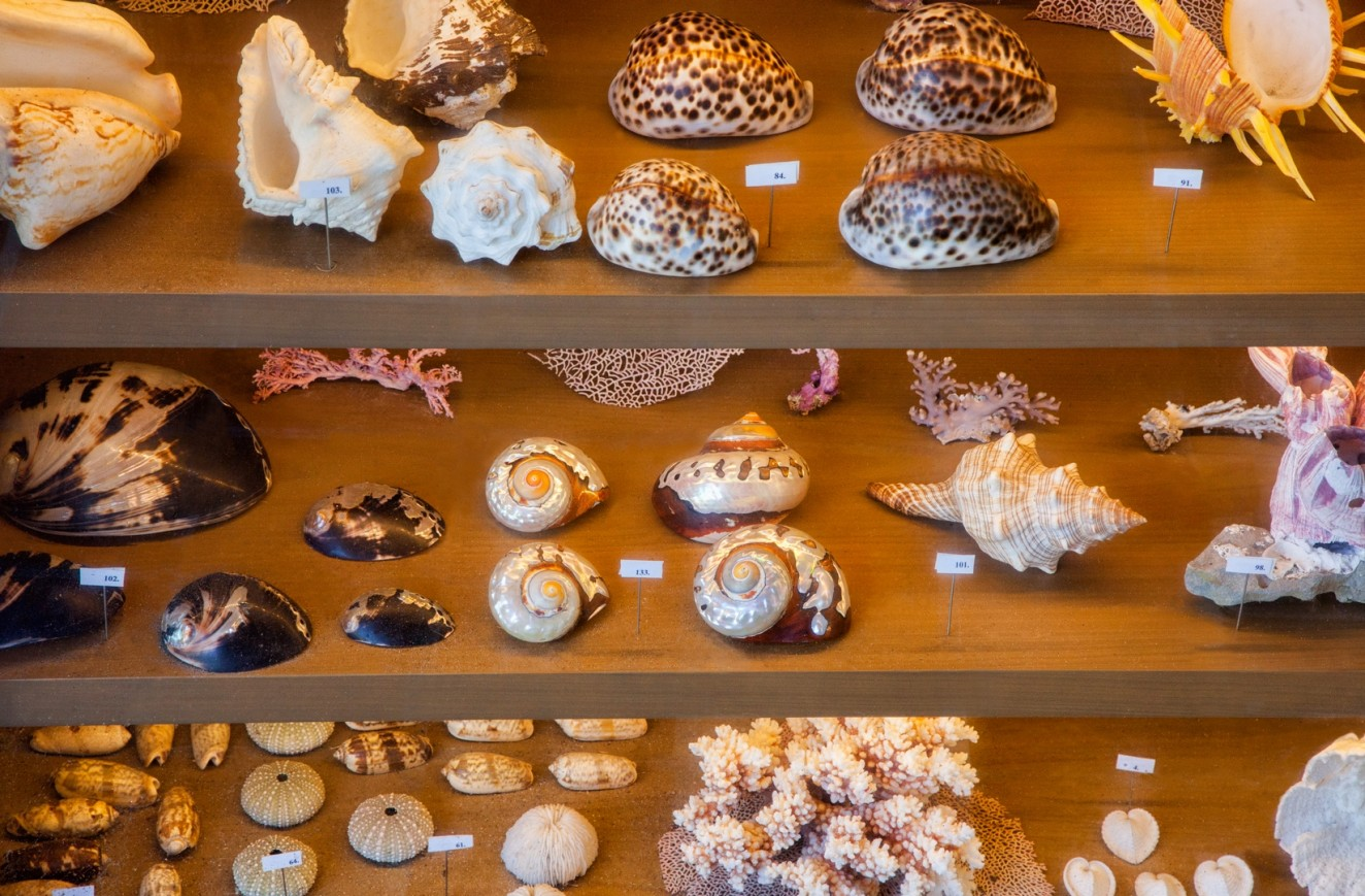 Shell Collections - The JF Library Foundation